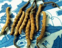 People like to consume cordyceps for general enhancement due to aging, chronic or major illness.
