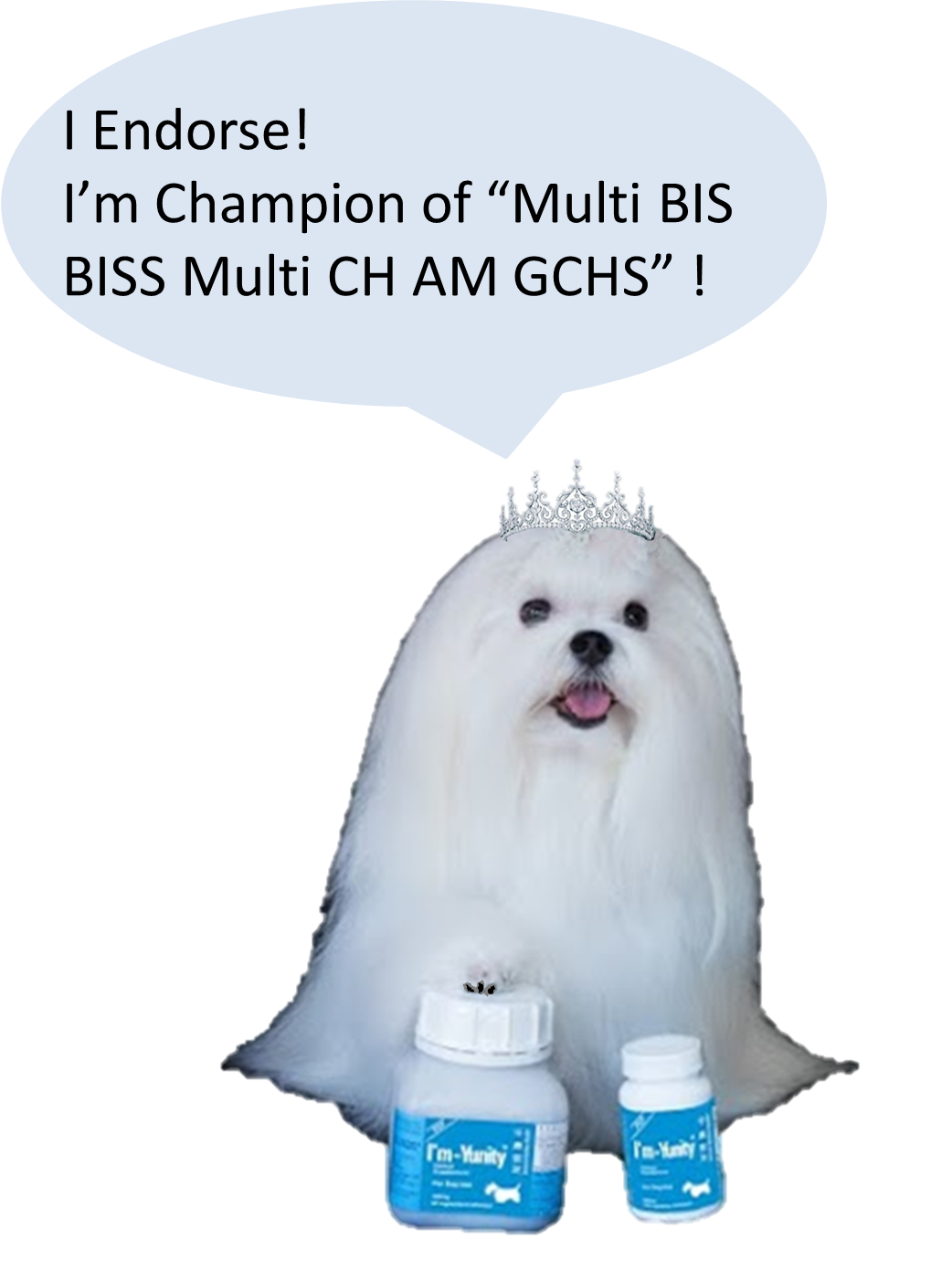 "Pearl was the Champion of ""Multi BIS BISS Multi CH AM GCHS,"" #1 Female GCH Points (Maltese) 2016."