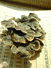 Studies show that cloud mushroom benefit the overall immune system