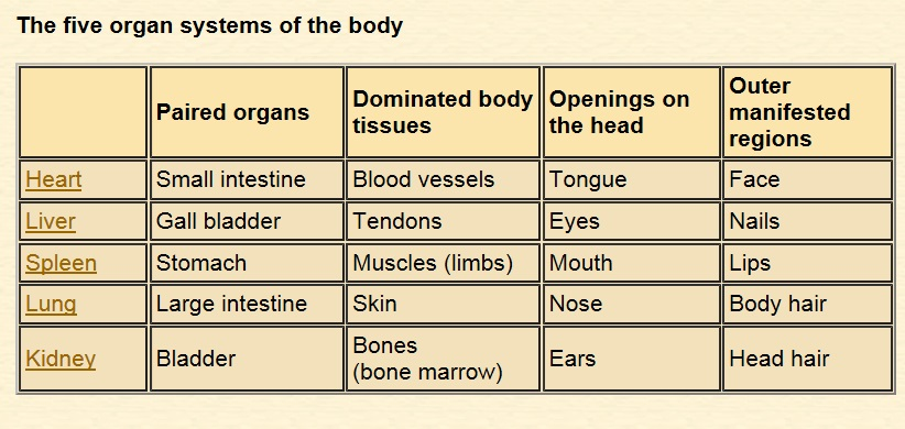 TCM five organ systems of body