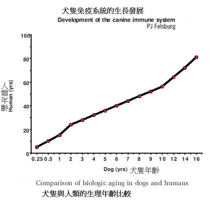 對5歲的狗狗來說,免疫系統已處於人類40歲的生理狀況,開始衰退.