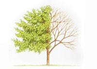 pic_tree