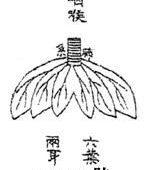 中醫理論裏的肺臟