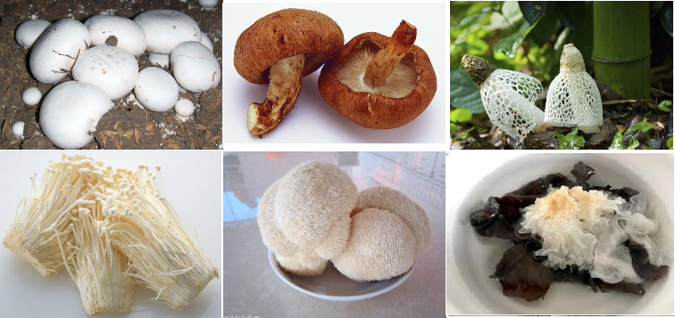 Edible mushrooms have different health benefits
