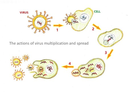 COVID-19 Plague Ongoing, Get Vaccinated and Boost Your Immune